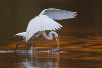Naturfotograf W. Martin