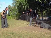 Послушная собака дома и на прогулке