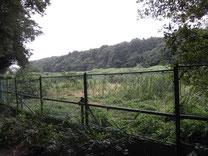アレチウリ除去後のフェンス