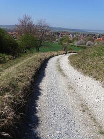 Postweg bei Liebenburg im heutigen Zustand (links die Spur für Reiter)