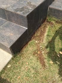 3cmの幅で綺麗に切り取りました。この芝生は別の所に移植。