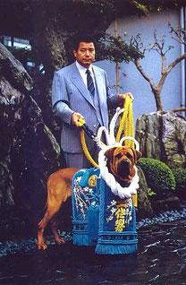 японская собака тоса ину