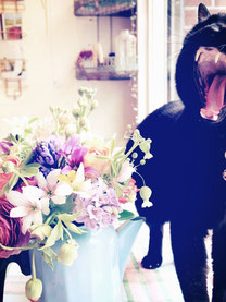 *ノロ*   2001年より1代目看板猫に。 2012年末に引退後も ちょくちょく写真で登場してます♪「のろまだからノロなノダ!」