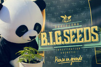 panda biggie big seeds semillas marihuana barcelona