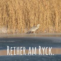Blogpost: Reiher am Ryck auf schwedenundso.de