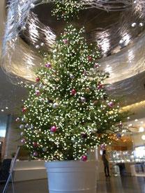 有楽町丸井イトシア店 出店 横浜スイートクリスマスカンパニー 横浜コットンハリウッド