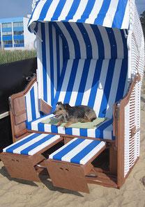 Meer und Mehr: Nordsee Urlaub mit Hund in Cuxhaven/Sahlenburg
