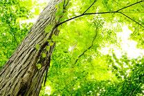 日本 北海道 札幌 爽やかな森林浴