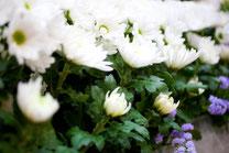 葬儀のイメージ 白菊