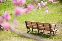 ベンチと梅の花
