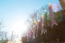 日本 北海道 定山渓 逆光と鯉のぼり