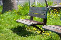 日本 北海道 札幌 緑に包まれるベンチ