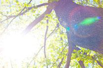 大樹からの陽射し1