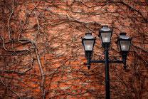 レンガ壁と蔦と街灯