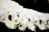 葬儀イメージ 白菊