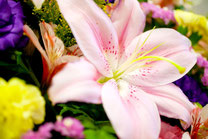 百合と花たち