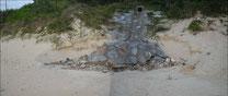 排水施設の浸食によりアカウミガメの産卵巣が流出した箇所(沖縄島)