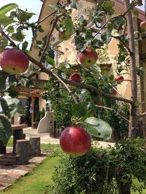 長野から応援に来た(^^)/りんごの木