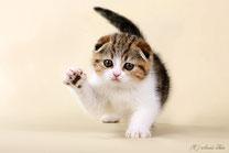 Наши котята - самые сладкие