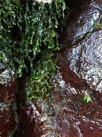 岩から流れる水 養老渓谷2013年