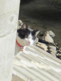 最近トラ子ちゃんと仲良しの赤鈴にゃんこでした。