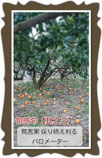 旬感句【師走 其之参】 鳥害果 採り終え判る バロメーター