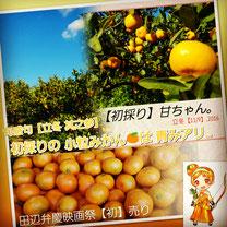 田辺弁慶映画祭 出店販売 ちぃちゃいおみかん【甘ちゃん。】 和×夢 nagomu farm
