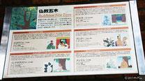 仏教五木の説明(草津市立水生植物公園みずの森)