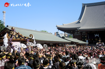 2014年 三社祭(5月18日): 本社神輿宮出し ⓒreal Japan 'on!