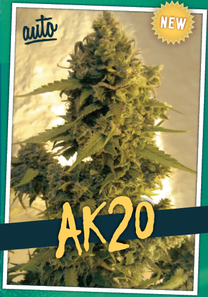 alerta kamarada semillas cannabis