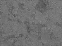 光学顕微鏡観察組織