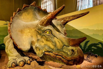 Visit il Museo di storia naturale