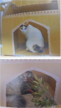 猫とも新聞102号のあさひとターニャ