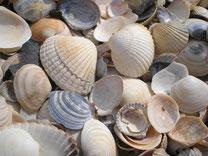 die Nadelepilation der Steinzeit...Muscheln