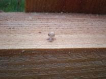 naissains sur une plance de bois du parc