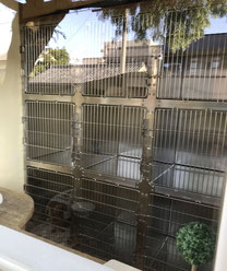 中庭に面した犬の部屋
