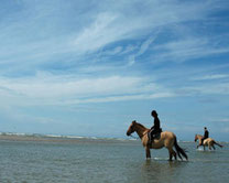 Avec les chevaux Henson au domaine du Marquenterre