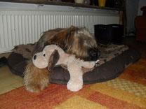 Unser Lunabär mit Kuschelhund