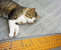 A cat sleeping on a tile floor with the Schluter Ditra Heat in-floor heat system under it.