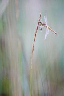 Libelle - © Jean-Philippe Bonnet, GDT