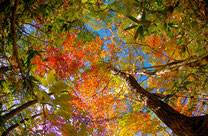 リンク画像:秋の体験プログラム