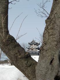 写ッセ ジュニア大賞 No.40233 春が待ち遠しい桜と高田城 田邉 李樹(上越市)