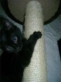 Sirius, 3 mois