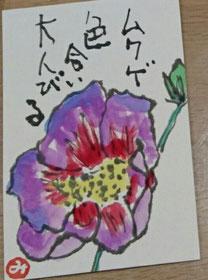 8 ムクゲ
