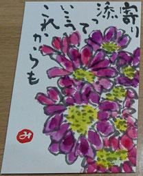 37 小菊