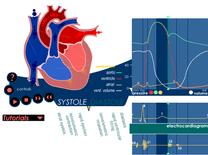 Simulador de Ciclo Cardiaco