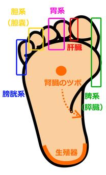経絡はいろいろなものがあり一つに限らないそうです。復習がてら、自分なりに図にまとめてみました。自分の足をマッサージしてみて、痛みや腫れがある箇所は、体内からのSOSかも。