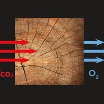 La Fotosintesi - CO2