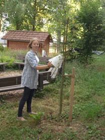 """Obstbaumspende des Fördervereins im """"Grünen Klassenzimmer"""""""