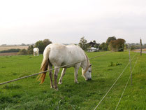 Landschaft mit Pferd in Strohkirchen
